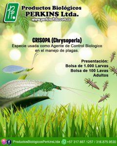 CRISOPA