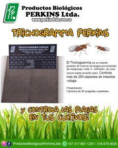 TRICHOGRAMMA SP CONTROL BIOLÓGICO