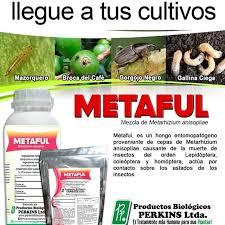 METAFUL